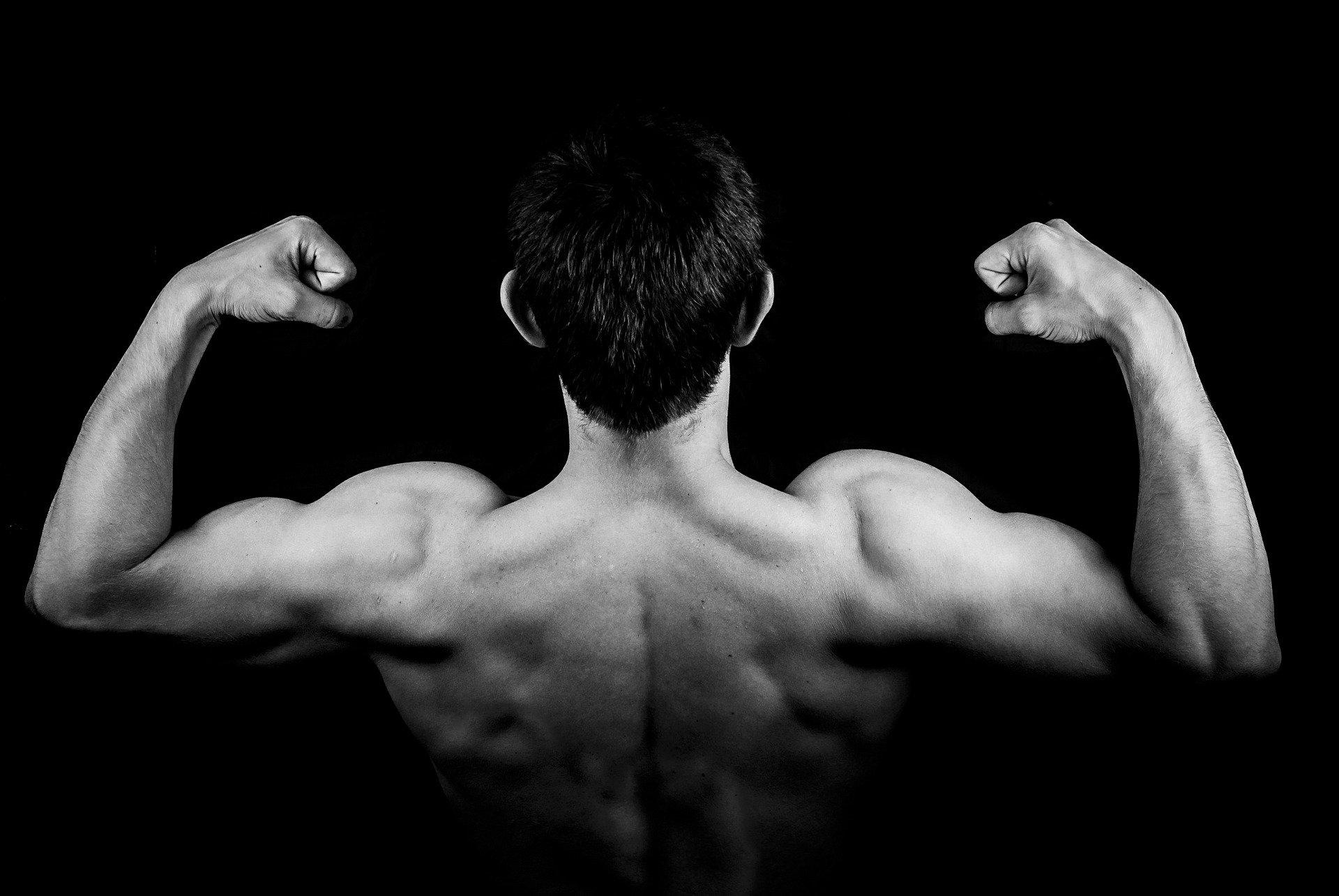 Quelle partie du corps travaille le rameur ?